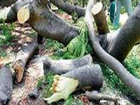 HC notice to govt on details of trees felled for projects