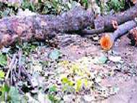 NGT fines sarpanch & gram sevak Rs 15 lakh for deforestation