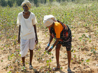 In Beed district, 105 farmers ended life in August alone