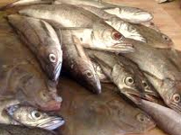 Lakshadweep tops in fish consumption, Bengal 4th