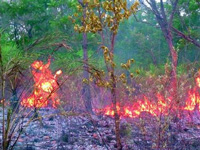 Forest fire in Boudh