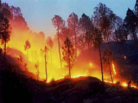 Twin forest fires reported in 2 days