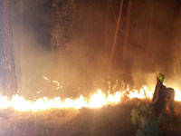 Fire in Kasauli forests halts two trains