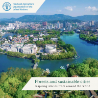 Forests and sustainable cities: inspiring stories from around the world