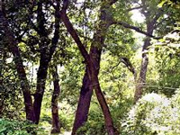 Gujarat's rural tree count grows to 34 crore