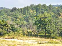 Centre eases rules for trees on private land