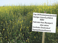 PAU told not to conduct GM mustard field trials