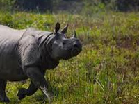 2 rhinos poached in 4 days in Kaziranga