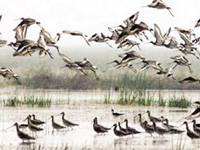 Over 8.58 lakh migratory birds throng Chilika this year