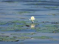 Fresh froth in Varthur lake flies in the face of BDA