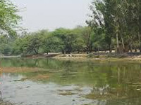 Pollutants kill fish at Dhanas, Sukhna lakes