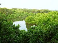 Rajahmundry: Mangroves felling poses threat