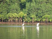 Locals: Mangroves in Adpai hacked for construction