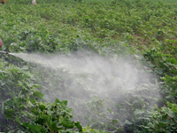 Farmers urged to make judicious use of pesticides