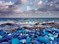 Plastic  is climbing up the marine food chain
