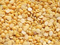 'Climatic conditions, pollution leading to low yield of pulses'