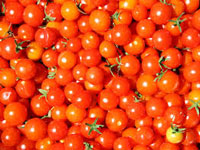 Tomatoes can fight stomach cancer