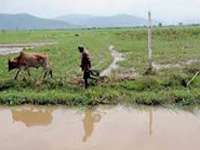 States to get greater role in wetland management