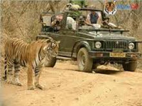 HC sets deadline for Gir eco-tourism policy
