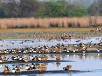 Bird flu: Haryana forest dept monitoring birds at Sultanpur National Park