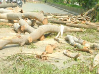 4,137 trees felled legally, almost none replaced across city