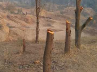 No Posco, but 3L trees axed for project