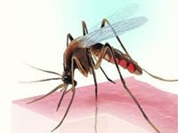 Dengue cases reach 341 in city