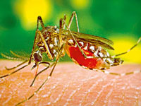 Maximum cases of dengue reported from Mohali, Patiala, Hoshiarpur