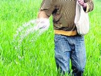 Natural fertiliser to replace chemical fertiliser with no harm to environment