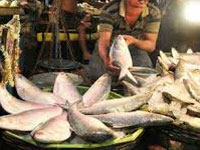 Exporters, eateries warned over selling poisonous fish