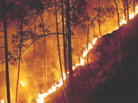 Government ignoring proposal on forest fires: Panel