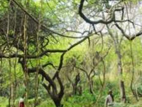Regulate people movement in forests, directs env ministry