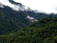 Over 1,54,358 hectares of forest area planted in Manipur