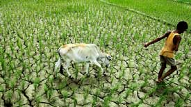 Monsoon friendly Assam reeling under drought