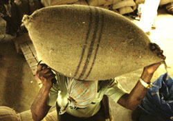 Centre eases quarantine norms for wheat imports
