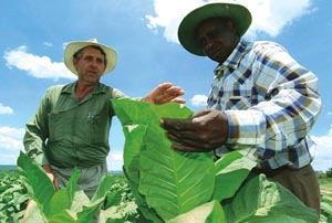 No state support to Zimbabwe`s A2 farmers