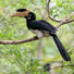 Hornbills and endemic birds: a conservation status survey across the Western Ghats, India