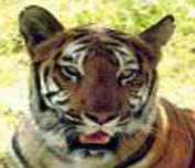 Generic guidelines for preparation of security plan for tiger reserves