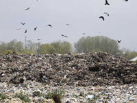 Panchkula: Open waste at dumping site angers residents