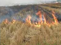 Now, burning agricultural residue in open to attract fine