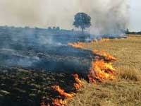 Stubble burning: Punjab to study Nagpur's initiative of using agri-waste briquettes for cremations