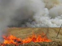 Change policy to stop crop fire