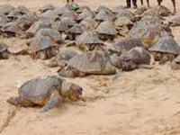 Centre approves setting up a turtle sanctuary in Allahabad
